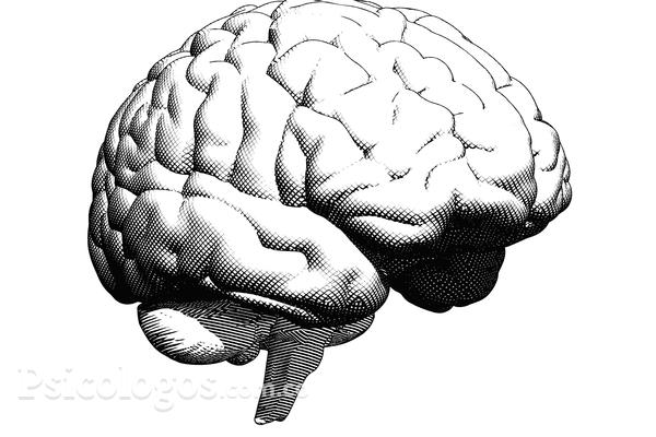 ¿Pautas básicas en el estudio de la mente?